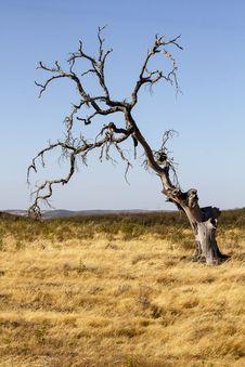 Dead Tree On Dry Land Stock Image