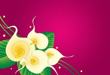 Free Calla Lily Floral Background Stock Photography - 26811112