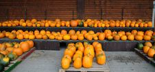Free Pumpkins All In A Row Stock Photo - 26812480