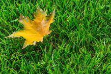 Free Leaf On Grass Stock Photos - 26812813
