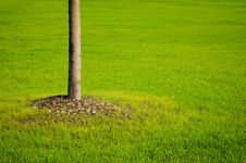 Free Tree And Grass Stock Photos - 26812943