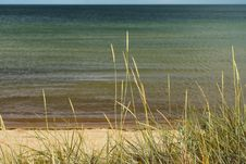 Free Reed At The Beach Stock Photography - 26814522
