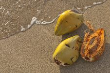 Free Coconut Shells In Tropical Beach Water Stock Photos - 26814813