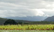 Free Farming Land  Covered Thundercloud. Stock Photos - 26815943