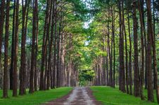Free Pine Trails Park Royalty Free Stock Images - 26816699
