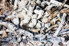 Charcoal And White Ash Of Extinguished Bonfire Stock Image