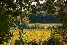 Free Rural Landscape With Vineyards Royalty Free Stock Photography - 26818897