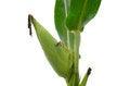 Free Raw Corn Stock Photo - 26824790