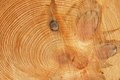Free Cut Of The Pine Trunk Stock Photo - 26824990