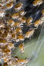 Free Spider Babies On A Web Stock Photo - 26827540