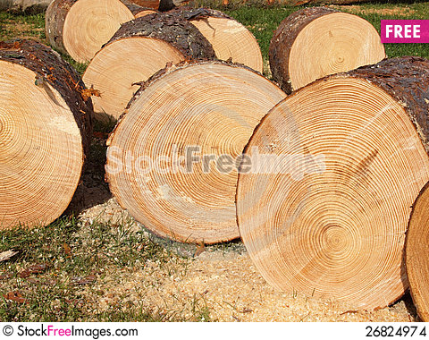Free Logs Cut Of A Conifer Tree Stock Images - 26824974