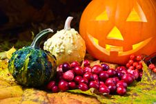 Free Still-life With Pumpkins And Cranberry Royalty Free Stock Photography - 26824587
