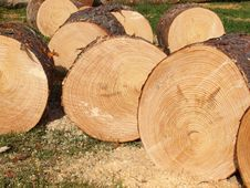 Logs Cut Of A Conifer Tree Stock Images