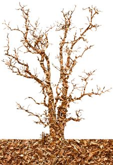 Free Abstract Isolates Of Sawdust In The Dry Tree. Stock Photography - 26825782