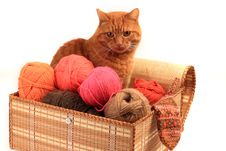 The Red Cat Sits In A Box. Royalty Free Stock Photography