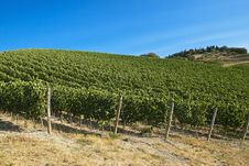 Free A Vineyard In Italy Royalty Free Stock Photo - 26825975