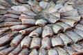 Free Dry Gourami Fish Stock Images - 26835884