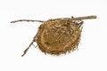 Free Bird Nest Stock Photo - 26838270