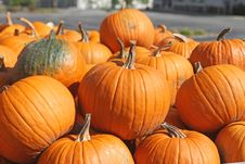 Free FRESH PUMPKINS Royalty Free Stock Photo - 26835175