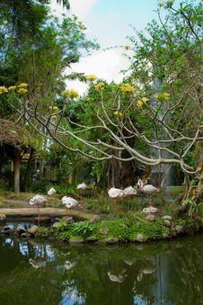 Free Pink Flamingos. Stock Photo - 26836690