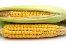 Free Fresh Corns With Green Leaves Royalty Free Stock Photo - 26837725