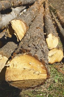 Free Felled Tree Trunks Royalty Free Stock Photo - 26838885