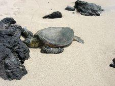 Free Turtle On A White Sandy Beach Stock Photo - 26849570
