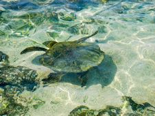 Free Turtle Swimming Stock Photos - 26849573