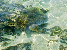 Free Turtle Swimming Royalty Free Stock Photos - 26849588