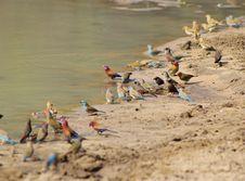 Free Birds, Wild - Super Striking Nature Royalty Free Stock Photo - 26852905