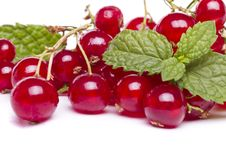 Free Tasty Red Currant Berries Royalty Free Stock Image - 26854916