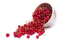 Free Tasty Red Currant Berries Stock Photo - 26855060