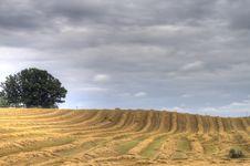 Free Striped Field Stock Photo - 26857760