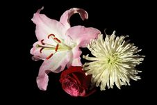 Free Bouquet Of Fresh Bright Flowers Royalty Free Stock Photos - 26859528