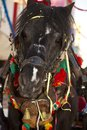 Free Head Of A Donkey Royalty Free Stock Image - 26861866
