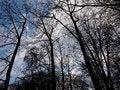 Free Tall Trees Stock Photo - 26869810