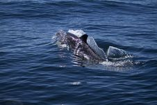 Free Wild Dolphins Royalty Free Stock Photos - 26860678