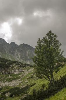 Free The Tree Royalty Free Stock Photos - 26862178