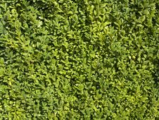 Free Green Leaves Background Stock Image - 26862361