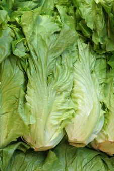 Free Lettuce Stock Photography - 26863652