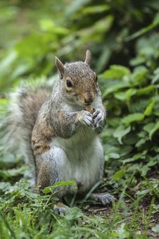 Free Squirrel To Keep Nuts Stock Image - 26863991