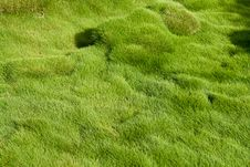 Free Thick Soft Green Grass Stock Photo - 26869930