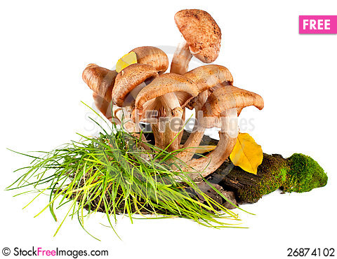 Free Group Of Fresh Mushrooms Stock Photography - 26874102