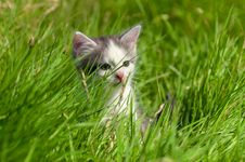 Free Little Kitten Stock Images - 26870584