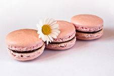 Pink French Macarons In Row Stock Photos