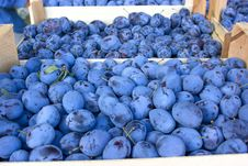 Free Organic Plums - Damson Royalty Free Stock Photos - 26872498