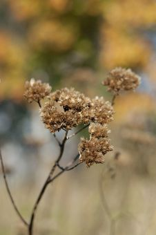 Free Dried Flowers Stock Photography - 26875892