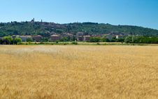 Free Superb Wheat Field Stock Images - 26876924