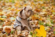 Free Dog  In A Park In Autumn. Royalty Free Stock Images - 26878399