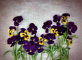 Free Violet Pansies Royalty Free Stock Image - 26888216